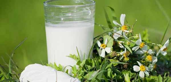 8 Tác dụng của bột sắn dây đối với sức khỏe