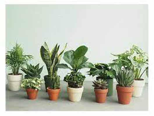 5 loại cây phong thủy giúp gia chủ hút tài lộc vào nhà